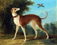 "Jean-Baptiste Oudry, Greyhound Dog, Blue Bird, antique Home Decor 20""x16"" Art"
