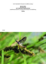Greeting cards Mayfly