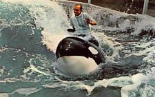 SAN DIEGO, CA California  TRAINER RIDING SHAMU~Killer Whale SEA WORLD Postcard