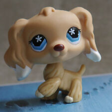 "LPS Littlest pet shop MINI2"" FIGURE TOY daisy blue eyes Cocker Spaniels Dog #748"