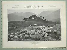 1903 Imprimé Highland Troupeau Coucher en Scotch Valley