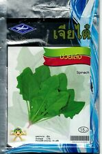 Chia Tai 110 Seeds Spinach Outdoor Garden Healthy Vegetable Product of Thailand
