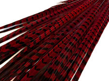 """50 Pieces - 20-22"""" WINE RED Ringneck Pheasant Long Tail Feather USA Supplier"""
