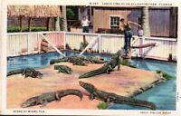 Vintage Postcard. 1935 Lunch Time ALLIGATOR FARM Miami FLORIDA Linen  pb2