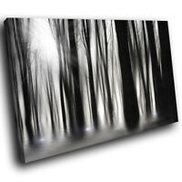 SC348 Black White Trees Nature Landscape Canvas Wall Art Large Picture Prints