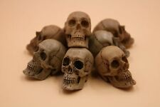 Resin Skull Action Figure Accessory of 1/6 Scale