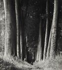 1930 Original MAN RAY Tree Forest Landscape Vintage Photo Gravure Art 16x20