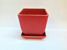 Eco Forms Biodegradable plant pot herb bonsai succulent cactus  1 pot/saucer