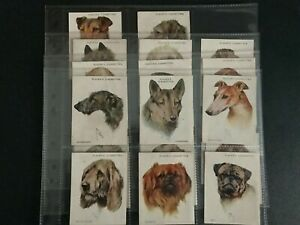 cigarette cards dogs heads 2nd series large 1928 full set