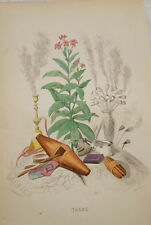 GRANDVILLE-FLEURS ANIMEES-GRAVURE  TABAC 1852 PRINT