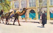 Iran Isfahan Shah Square Man and Camel sk4071
