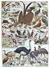 SCIENTIFIC BIRDS IDENTIFICATION OSTRICH PENGUIN FLAMINGO ART PRINT POSTER BB9405