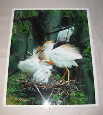 "Beautiful Photograph of Cattle Egrets, Louisiana 8 x 10"" Signed, Kodak Image"