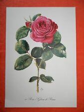 Rosa Rose Gloria di Roma Duftrose Farbdruck Frankreich 1962