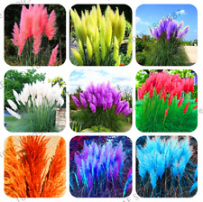 100 PCS Seeds Pampas Grass Bonsai Plants Ornamental Flowers Cortaderia Selloana
