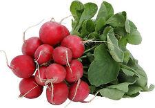radish, EARLY SCARLET GLOBE, RED RADISH, 385 seeds GroCo