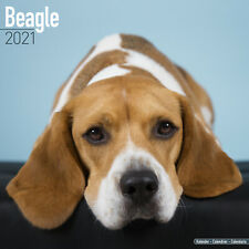Pekingese 2021 Dog Breed Calendar 15/% OFF MULTI ORDERS!
