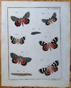 Engramelle Originaldruck Schmetterlinge Papillons d´Europe Tafel 323 - 1779