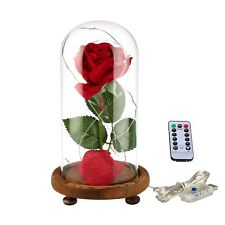 "Ysber ""Beauty the Beast"" Red Silk Rose and Led Light with Fallen Petals in"