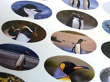 Pingüino Oval Sello Etiquetas, Calcomanías Para Craft, Envoltura De Regalos, Tarjetas lov-a73