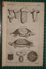 1764 Antiguo impresión ~ Carpas Testudo Tortuga ~ orden del Cardo