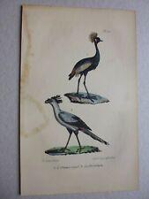Gravure couleur 19° :Oiseaux:  L'oiseau royal...le secrétaire