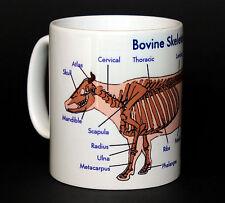 Vet / Veterinary Bovine Anatomy Skeleton Student Gift Mug