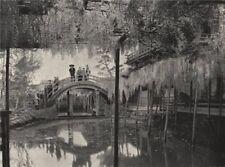 TOKYO. The Shinji-No-Ike Pond, and wistaria, Kameido. Japan 1895 old print