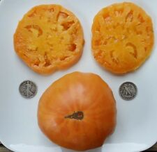 Kellogg's Breakfast - Organic Heirloom Tomato Seeds - Great Beefsteak - 40 Seeds