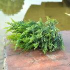 Hot Sale 7 Grand Forks Ornament Decor Green Plant Grass Plastic Home Ornament