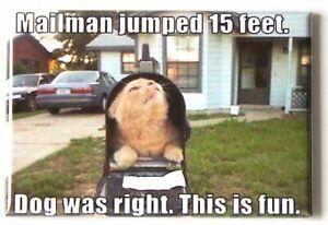 "Mailman Cat Meme MAGNET 2""x3"" Refrigerator Locker Jump 15 Feet Dog"