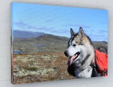 MOUNTAIN HUSKY/WOLF /DOG CANVAS PICTURE PRINT CHUNKY FRAME LARGE 2231-2