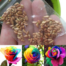 Rare Holland Beauty Rainbow Rose Flowers 100 Seeds Home Garden Potted Plants