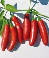 SERRANO PEPPER SEED, HOT PEPPERS,  HEIRLOOM, ORGANIC, NON GMO, 20+ SEEDS, GARDEN