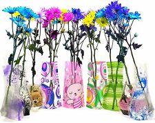12Pcs Foldable Flower Vase reusable Home, Office, parties, catering Decoration