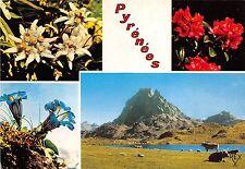 BR6521 Le Pic du Midi d'Ossau et Fleurs des Pyrenees   france