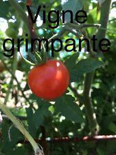 Bio Et Reproductible Graine De Tomate Cerise Bianca