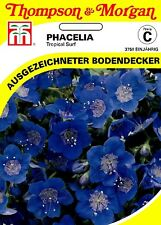 büschelschön' Tropical Surf' - phacelia viscida,cubierta vegetal,aprox. 500