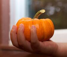 MINI KÜRBIS JACK BE LITTLE  5 Samen für Marmelade Suppe und Püree 200-400 Gramm