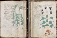 Voynich Manuscript Ancient Document Illustrated Codex Hand-Written 15th c DVD