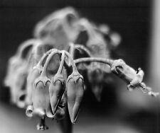 """MACRO PLANTASIA"" - FINE ART 7x7"" UNFRAMED PHOTOGRAPH KODAK b&w GLOSSY PAPER"