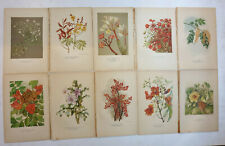 10pc x INDIA TREE FLOWER Chromolithographs 1930's - All Different (3)