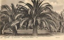 """Cannes France Le Grand Hotel Palm tree Postcard 5 1/2"""" X 3 1/2"""""""