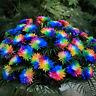 100 Rainbow Chrysanthemum Flower Seeds,Rare Special Unique Unusual Colorful Supe