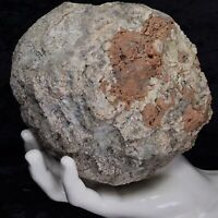 "6"" Red Unopened Geode Chalcedony Fossil Crystal Rattler Quartz Break Your Own"