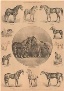 NATIONAL HORSE SHOW, MADISON SQUARE, by Frenzeny, antique original 1883
