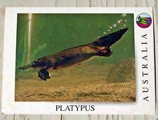 Post Card. PLATYPUS AUSTRALIA