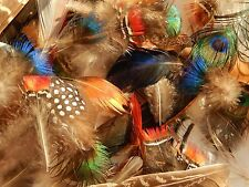 50 mixed bird feathers, peacock, pheasant, mandarin duck . small craft flytying