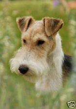 Wire Fox Terrier A6 Blank Card Design No 7 By Starprint