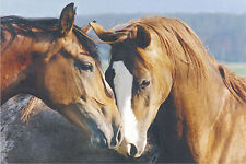 ANIMAL POSTER Tenderness Horses 24x36
